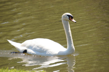 The many trails throughout the resort are home to wildlife such as ducks and a swan.